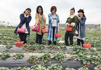 草莓园02.jpg