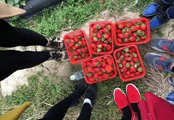 草莓园04.jpg